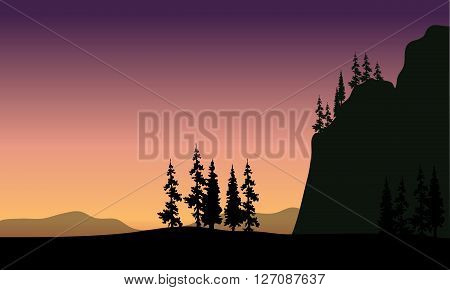 Spruce in hills silhouette at the sunset