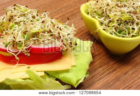Freshly prepared vegetarian sandwich and green bowl with alfalfa and radish sprouts lying on wooden table concept of healthy lifestyle diet food and nutrition