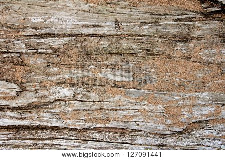 Background Of Dirftwood Covered In Grains Of Sand