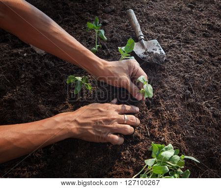 people planting young tree on dirt soil with gardening tool use for people activities and save nature earth for future