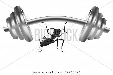 Ant Lifting Weight Dumbell Body Building