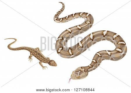 Image of snake and lizard isolated on white. Reptiles of desert and steppe zones.