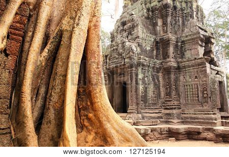 Big tree and ruins of temple in famous landmark Angkor Wat complex, khmer culture, Siem Reap, Cambodia