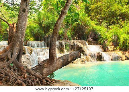 Tad Kuang Si waterfall in rainforest near to Luang Prabang, Laos