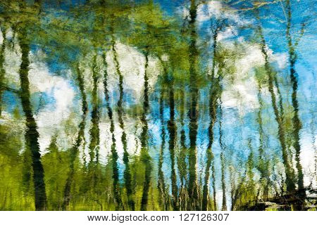 Trees And Blue Sky With Clouds Reflection On River