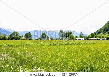 Green meadow with the caravan line in the summer.