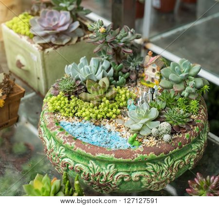 succulents in a planter