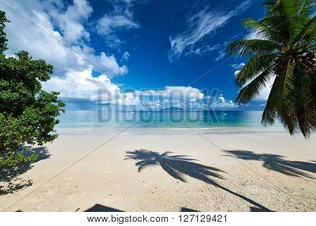 Beautiful beach with palm tree at Seychelles, Mahe