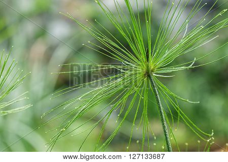Green Fresh flower grass with raindrops close up