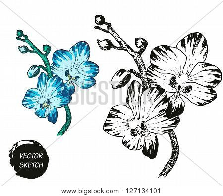 Vector Illustration of tropical Flowers in Sketch Style for Design, Website, Background, Banner. Doodle Summer Plant Element Template in color. Beach Botany