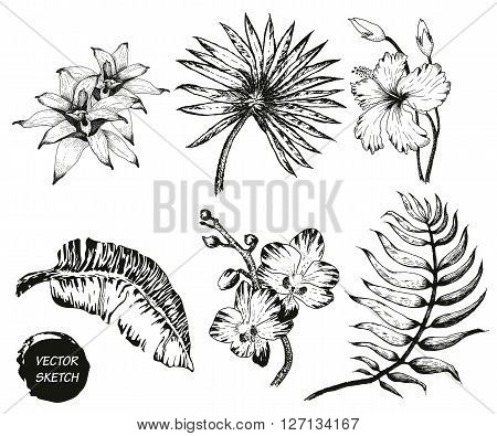 Vector Illustration of tropical Flowers and Palm in Sketch Style for Design, Website, Background, Banner. Doodle Summer Plant Element Template in color. Beach Botany