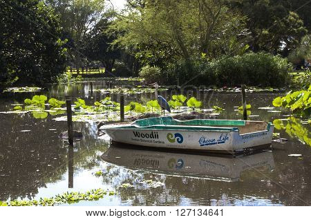 Stalk Bird And Boat On Pond In Batanical Gardens