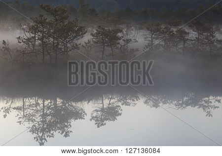 Reflection in the summer misty bog water