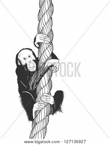 Vector zoo illustration. Little baboon monkey swinging on a rope