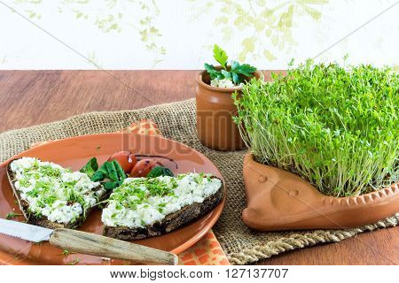 terracotta-hedgehog with home-grown garden cress and plate with brown bread and cream cheese garnished with cress lettuce and tomato on old jute sack