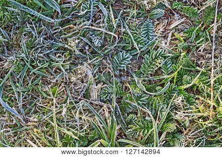 spring frost on the grass, frost, spring morning, texture
