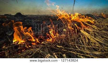 fire in the field of a dry grass