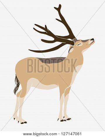 Vector illustration - Père David's deer (milu elaphure)