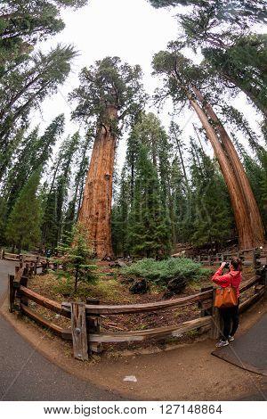 Girl in Sequoia National Park in California, summer 2015