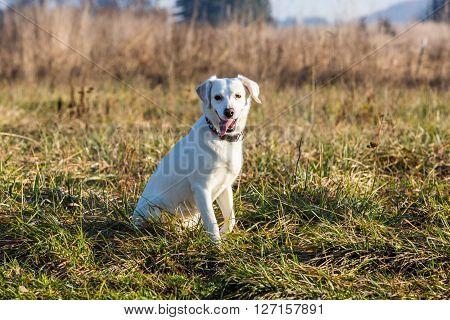 White Shelter Dog