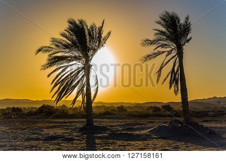 Sunset at beach in resort in Marsa Alam, Egypt