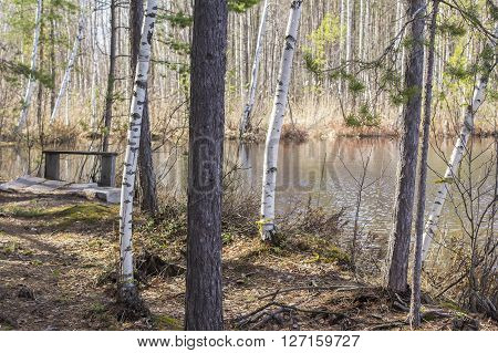 background landscape view of a beautiful forest lake among the mixed forest with a wooden bench