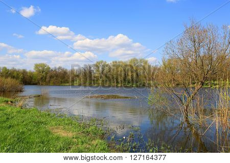 spring scene on lake in forest at nice day