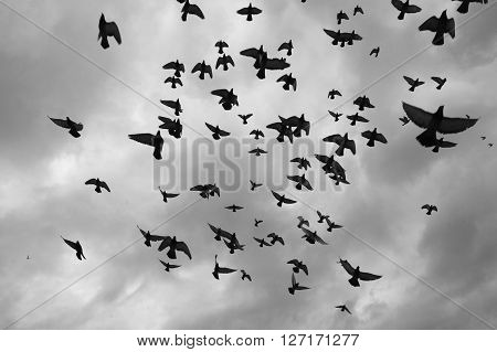 Group of doves flying on grey sky