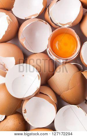 Egg Shell And Yolk