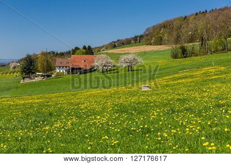 Meadow On Mountain Heitersberg, Near Zurich, Switzerland