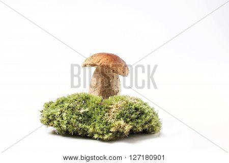 Cep Mushroom On Moss