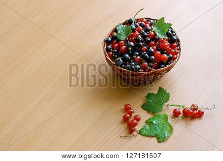 Red and black currants collected in a small wicker basket. The basket stands on a wooden surface. Next to them are some green leaves currant.