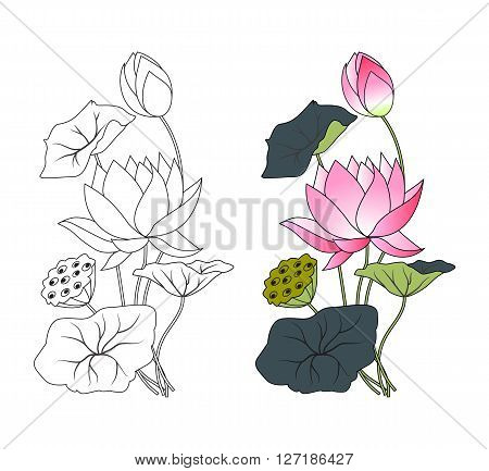 Blooming pink lotus and  leaf, coloring, vector illustration
