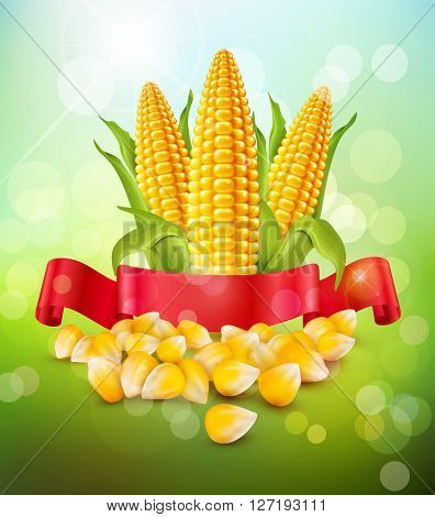 background with grains and cobs of corn and red ribbon