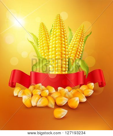 background with grains and cobs of corn and red ribbon(JPEG Version)