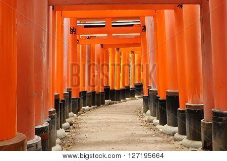 Torii in Fushimi Inari Shrine Taisha Kyoto Japan