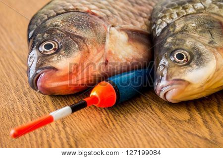 carp with fishing tackle on the wooden background