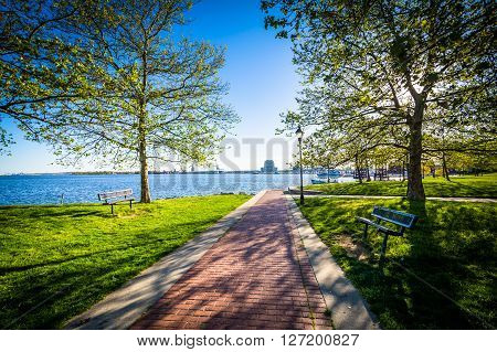 Trees Along A Walkway At Canton Waterfront Park, In Baltimore, Maryland.