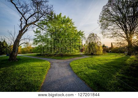 Walkway And Trees At Sunset, At Cylburn Arboretum, In Baltimore, Maryland.