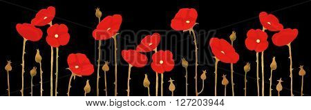 Panorama of blossoming red poppies on black background vector floral pattern