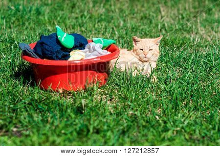 Laundry And Cat