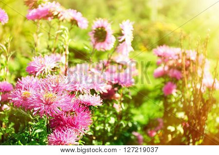 Beautiful flowers on meadow with sunlight