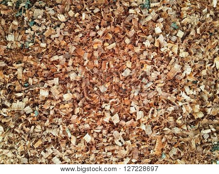 close up dry brown sawdust on the ground
