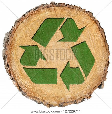 recycle symbol isolated organic earth section tree with rings cut fresh