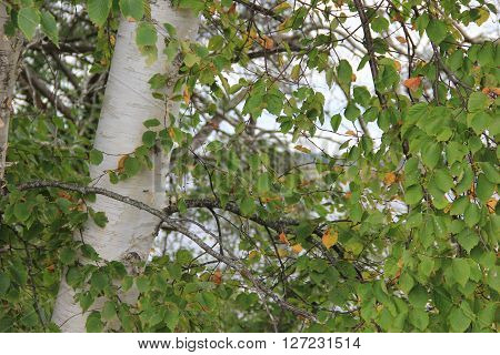 A tree grows in Michigan's Upper Peninsula.