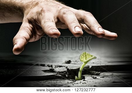 Male hand grab sprout
