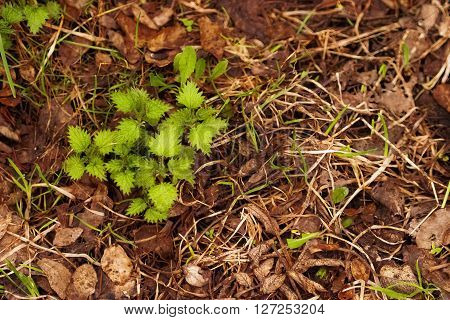 Young Green Sprout Growing In Dry Leaves