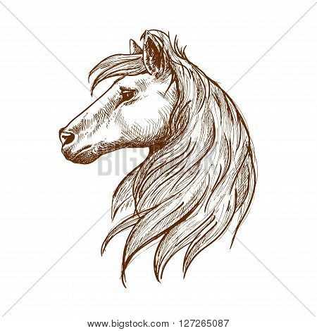 Wild horse head vintage engraving sketch symbol with profile of young stallion with long forelock and flowing curl of mane. Use as nature mascot or equestrian club symbol design