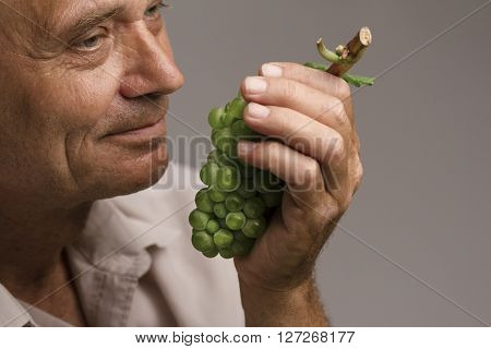 Horizontal portrait of a farmer holding a freshly harvested green grape in his left hand and smelling it
