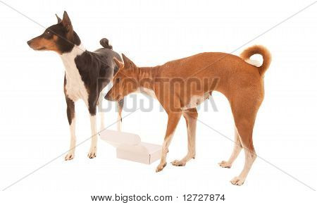 Dogs Query Empty Box